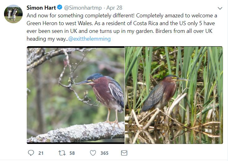 Green heron tweet - Simon Hart